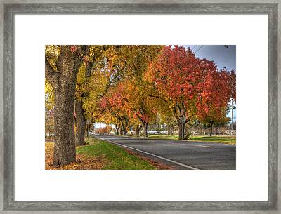 Midway Framed Print by Ren Alber