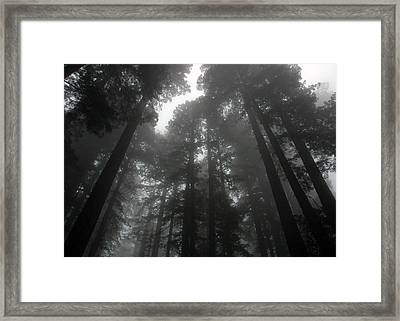 Mighty Redwoods Framed Print by Jonathan Schreiber