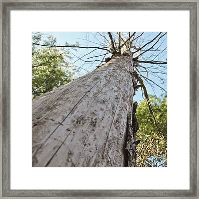 Mighty Tree And The Bark Beetle Framed Print