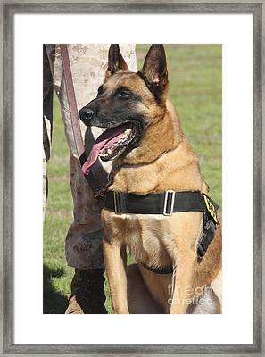 Military Working Dog Pants In The Hot Framed Print by Stocktrek Images