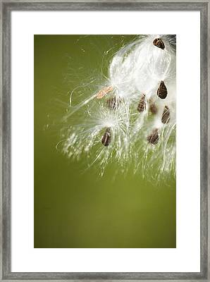 Framed Print featuring the photograph Milk Weed Seed by Lisa Missenda