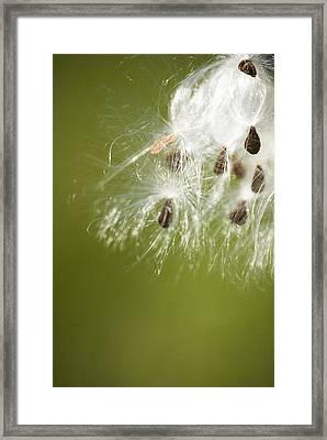 Milk Weed Seed Framed Print