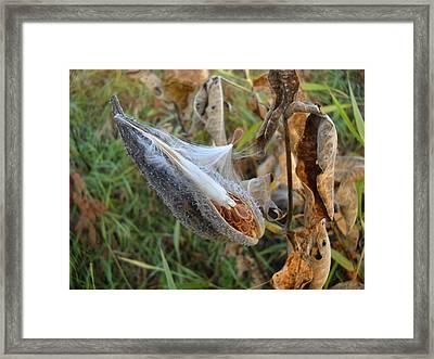 Milkweed - Spread Thy Seed Framed Print