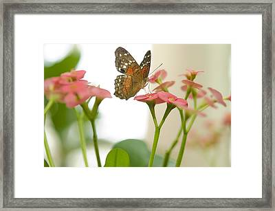 Milkweed Butterfly Framed Print by MaryJane Armstrong