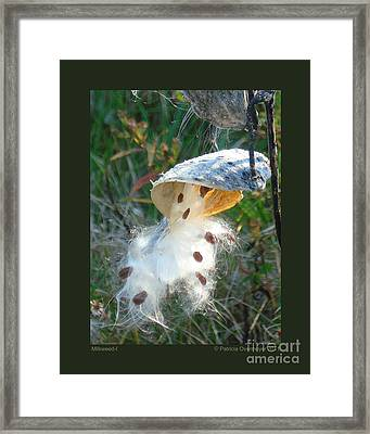Milkweed-i Framed Print by Patricia Overmoyer