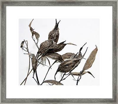 Framed Print featuring the mixed media Milkweed In Winter by Bruce Ritchie
