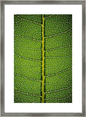 Milkweed Leaf Framed Print