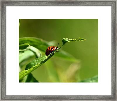 Milkweed Tortoise Beetle Framed Print by Jennifer Kosminskas