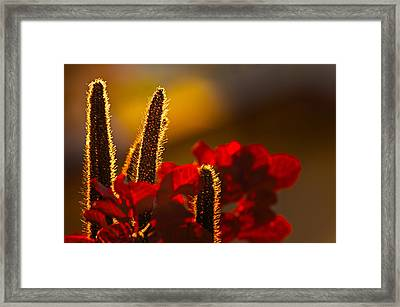 Millet At Sunset Framed Print