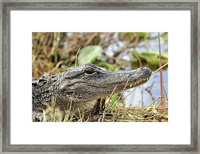 Framed Print featuring the photograph Million Dollar Smile by Helen Haw
