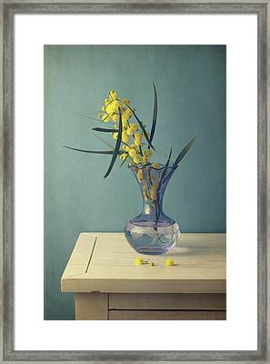 Mimosa Flower In Blue Vase Framed Print by Copyright Anna Nemoy(Xaomena)