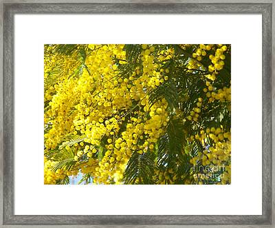 Framed Print featuring the photograph Mimosas by Sylvie Leandre
