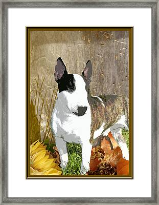 Minature Bull Terrier Framed Print by One Rude Dawg Orcutt
