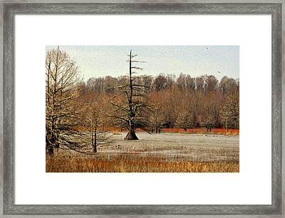 Mingo Swamp 1 Framed Print by Marty Koch