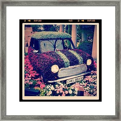Mini Adventure #clubsocial #chelsea Framed Print