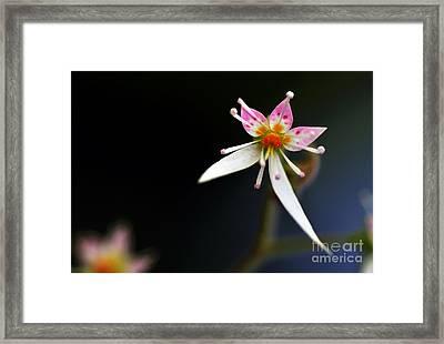Mini Cactus Flower Framed Print