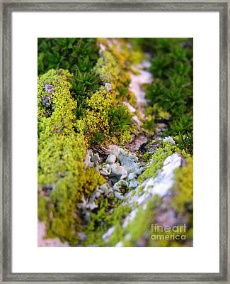 Mini Planet Framed Print by Tina Marie