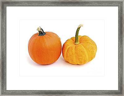 Mini Pumpkins Framed Print by Elena Elisseeva