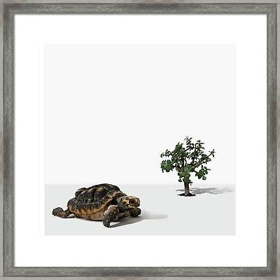 Mini Tree And Turtle Framed Print