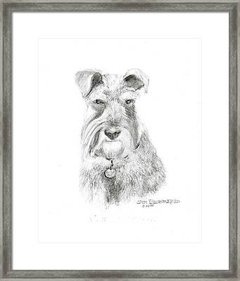 Framed Print featuring the drawing Miniature Schnauzer by Jim Hubbard