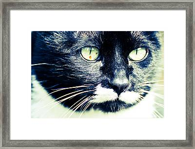 Framed Print featuring the photograph Minnie by Ronda Broatch