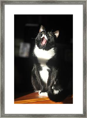 Framed Print featuring the photograph Minnie Singing by Ronda Broatch