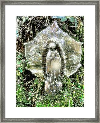 Miracle In My Garden Framed Print