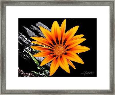Miracle Of A Flower Framed Print by Maciek Froncisz