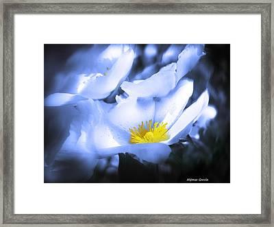 Mirando A La Luz Framed Print