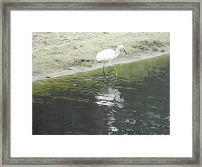 Mirror Image Framed Print by Debra Webb