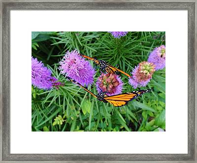 Mirror Image Framed Print by Katie Bauer