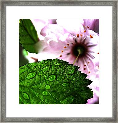 Mirror In The Seed Framed Print