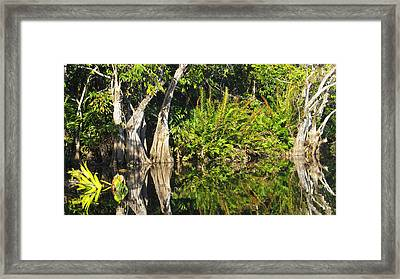 Mirror Pond Framed Print by Anne Mott