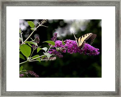 Framed Print featuring the photograph Mirrored Image by Paula Tohline Calhoun
