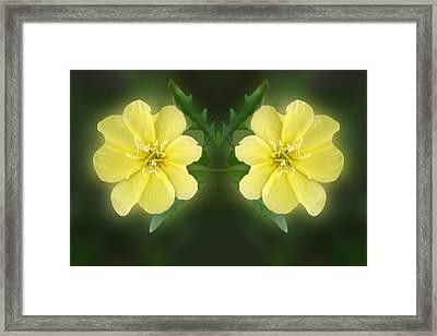 Mirrored Missoruri Primrose Framed Print by Linda Phelps