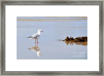 Mirrored Seagull Framed Print by Kaye Menner