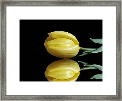 Mirrored Tulip Framed Print