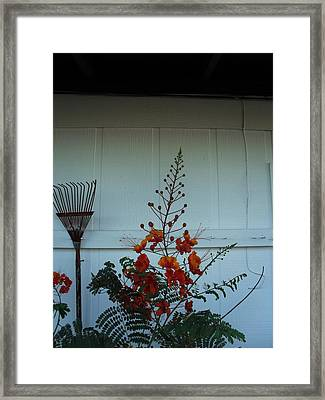 Miscellaneous Framed Print