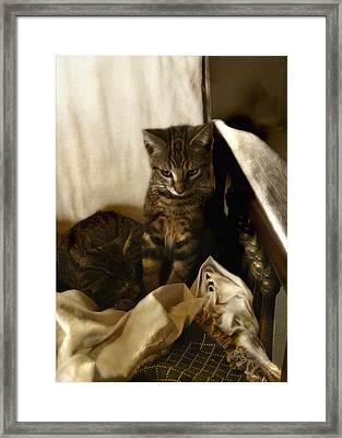 Mischief Resting Framed Print