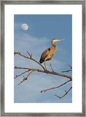 Missing The Moon Framed Print by E Mac MacKay