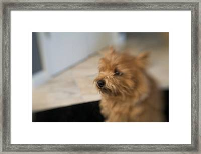 Missing You  Framed Print by Susan Stone