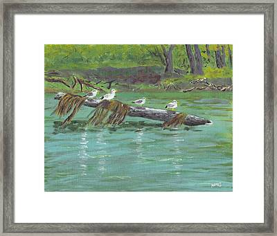 Mississippi River Gulls Framed Print by Nicole Grattan