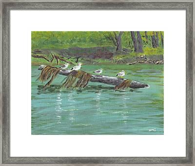 Mississippi River Gulls Framed Print by Nicole Grattan