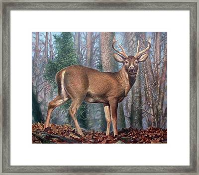 Missouri Whitetail Deer Framed Print