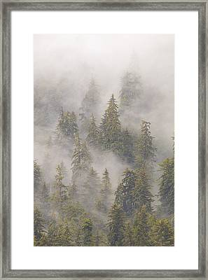 Mist In Tongass National Forest Framed Print by Matthias Breiter