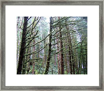 Mist On The Moss Framed Print by Will Borden