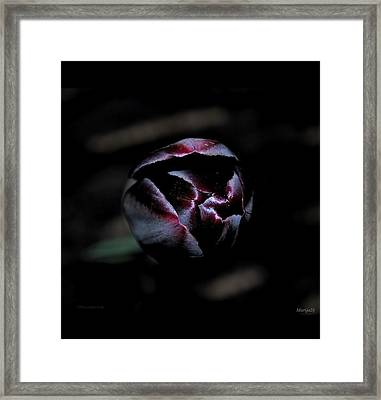 Framed Print featuring the photograph Misterious by Marija Djedovic