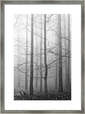Mistery In The Forrest Framed Print by Filomena Francisco