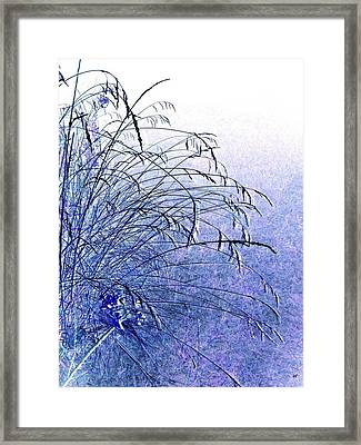 Misty Blue Framed Print by Will Borden