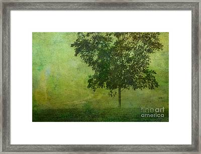 Misty Country Lane Framed Print by Judi Bagwell